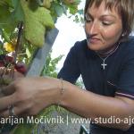 Viticoltura JNK